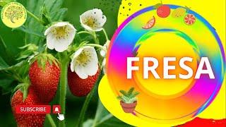 Extraer semillas de fresa y germinarlas
