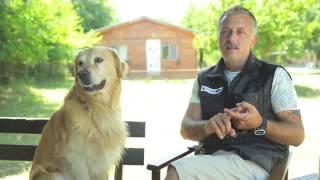 Köpek tuvalet eğitimi nasıl verilir?