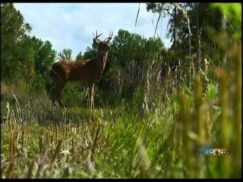 Robotic Deer Helps Catch Poachers