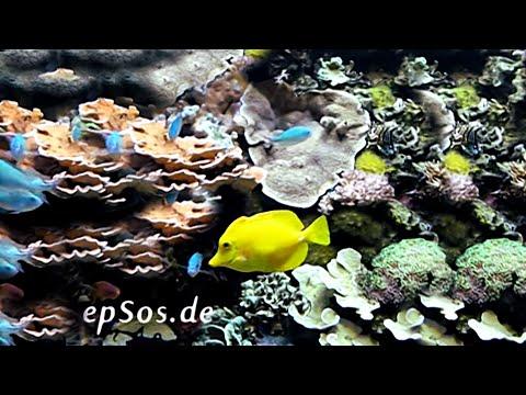 Marine aquarium fish in warm water youtube for Warm water fish