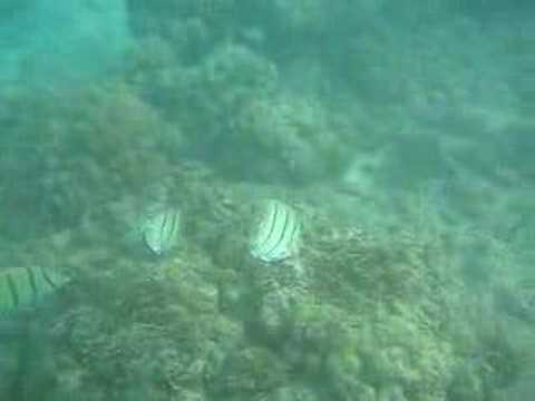 Convict Tang Wiki Manini Convict Tang