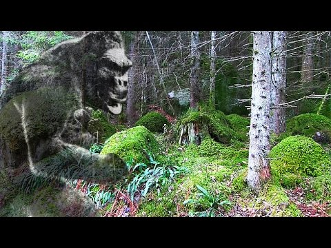 Bushcraft in a Primeval Forest. Home of the Sasquatch?
