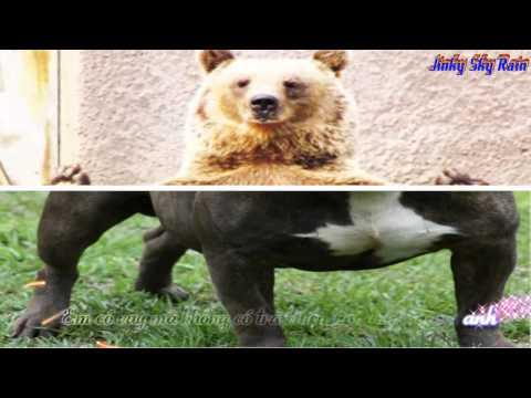 trả tiền cho anh-gấu+chó