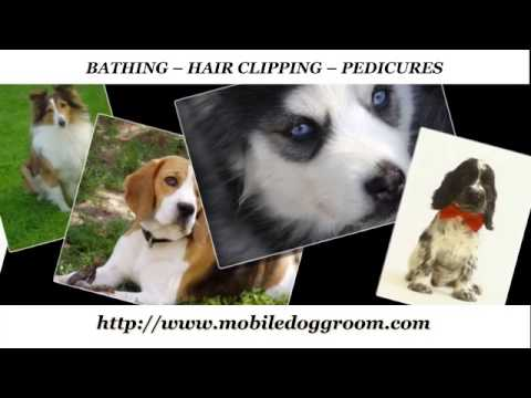♥♥♥ Cutest mobile dog grooming service ♥♥♥