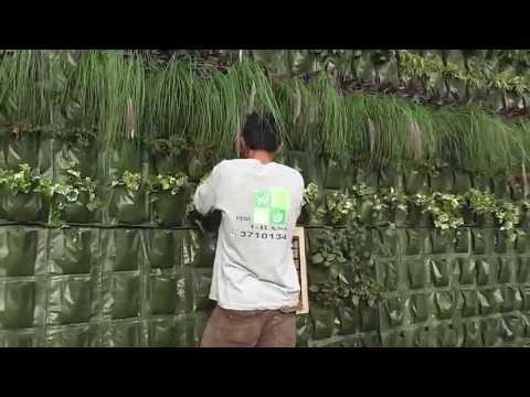 Como hacer un jardin vertical lima peru phim video clip for Jardines verticales lima