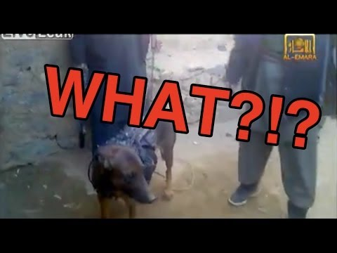Taliban Release Video Of Captured Military Dog (FULL VIDEO)
