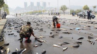 FISH RAIN. THE MOST UNBELIEVABLE TYPES OF RAIN ON THE PLANET
