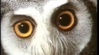 Evrim Teorisi ve Yaratılış belgeseli