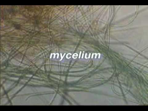 Structure of Fungi