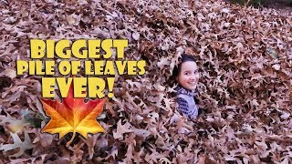 BIGGEST PILE OF LEAVES EVER 🍁 (WK 359.5) | Bratayley