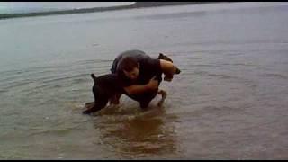 Pelea Perro Vs Humano.mp4