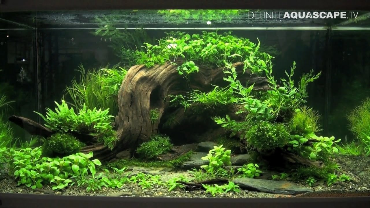 Aquascaping - The Art of the Planted Aquarium 2013 XL pt.2 - YouTube
