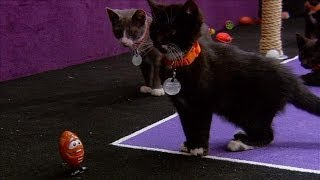 Kitten Bowl Makes Its Debut | Super Bowl XLVIII