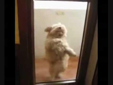 Pas koji pleše Salsu