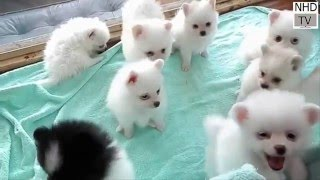 Cutes dogs | Cutest dog in the world | Cute dogs clips 2016