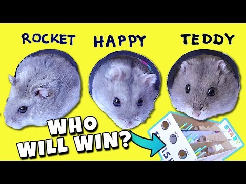 FUNNY HAMSTER RACE! Diy Obstacle Course from Cardboard for Hamsters - EASY!!