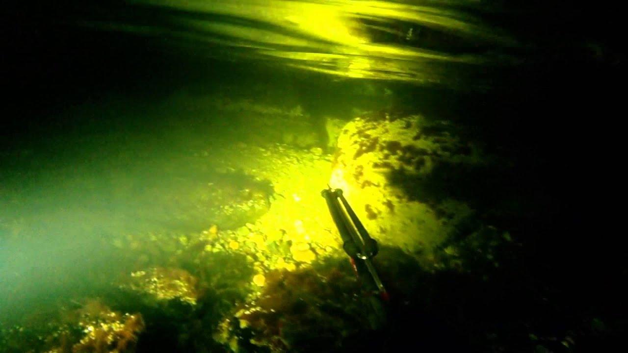 Sea trout fishing at night spearfishing youtube for Trout fishing at night