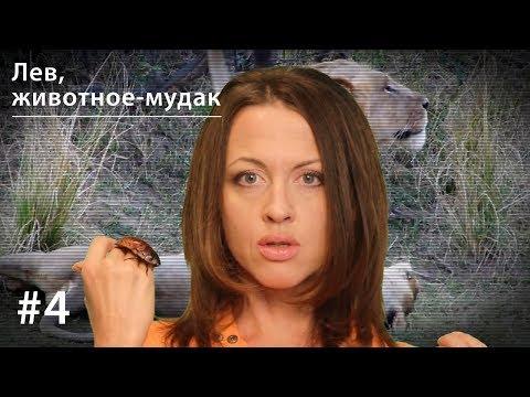 смотреть онлайн бесплатно секс животных: