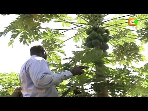 Somalia's Food Basket