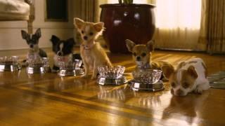 Perdido Pra Cachorro 2 Trailer Em Disney DVD