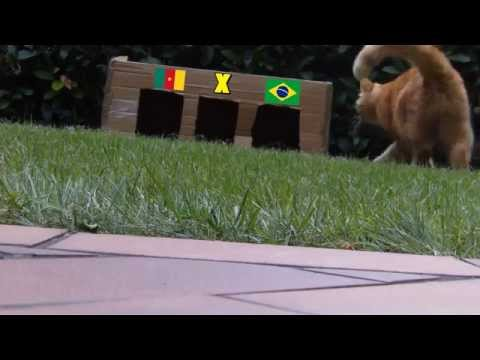 BRAZIL 2014 : CAMEROON - BRAZIL