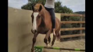 17HH Horse Being BROKE, His Progress Over 12 Weeks