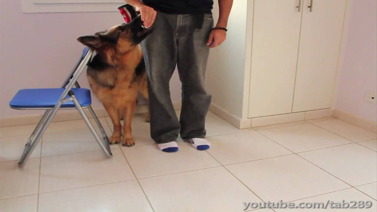 How To Clicker Train Dog To Heel