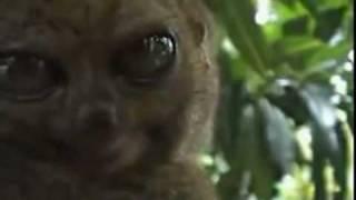 THX Lemur