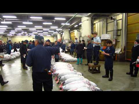 Tuna Auction at Tsukiji Fish Market in Tokyo, Japan