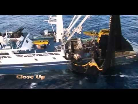 CLOSE UP PROMO - GREENPEACE ADVOCACY