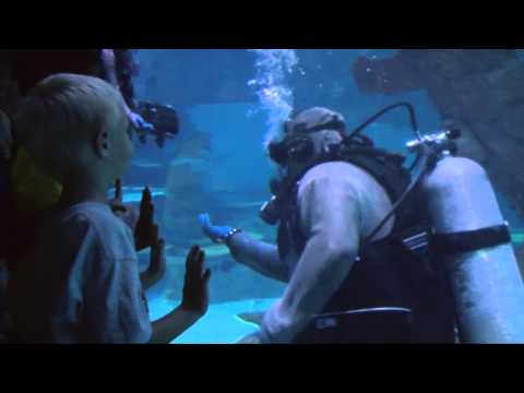 Shark Reef Aquarium Mandalay Bay Las Vegas Darcy