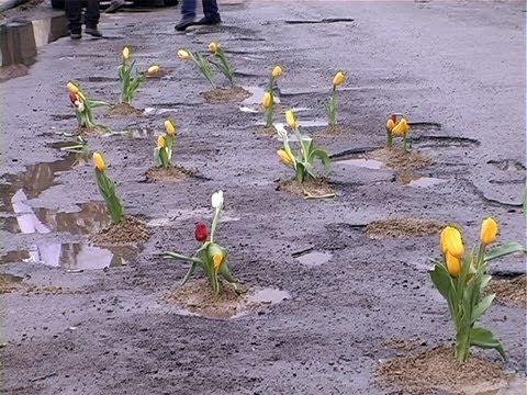 У Коломиї в дорожніх ямах висадили квіти