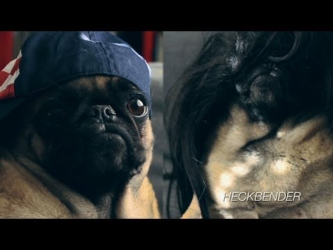 Jay Z and Solange Knowles Apology (PUG REENACTMENT)