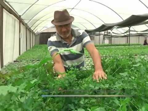 Conheça o processo de produção das plantas hidropônicas