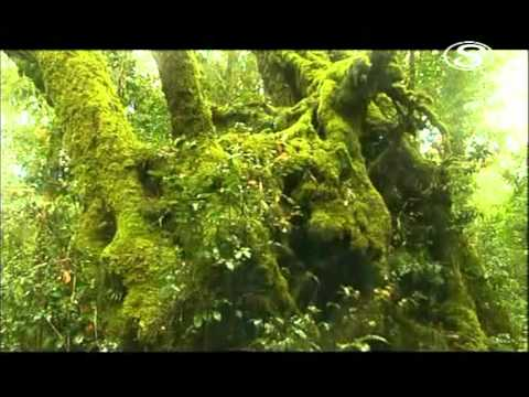 Dažďové pralesy