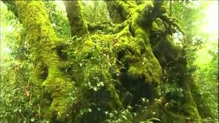 Da��ov� pralesy