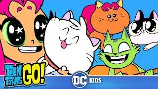 Teen Titans Go!   A Funny Cat Video   DC Kids