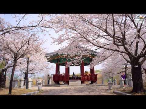Vietnam Nature Video Vietnam Nature Video