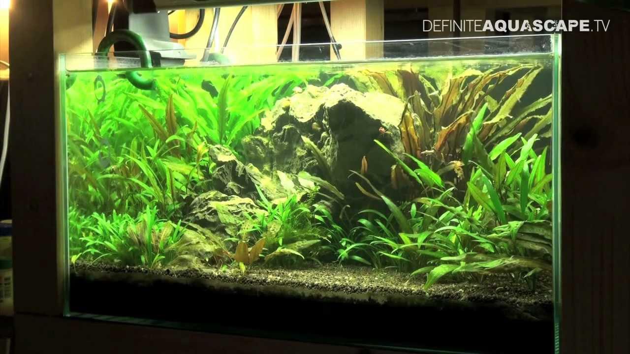 Aquascape - Planted tank 60x40x30 no 3 (low-tech style) - YouTube