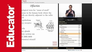 """""""Smell, Taste & Touch""""   Anatomy & Physiology with Educator.com"""
