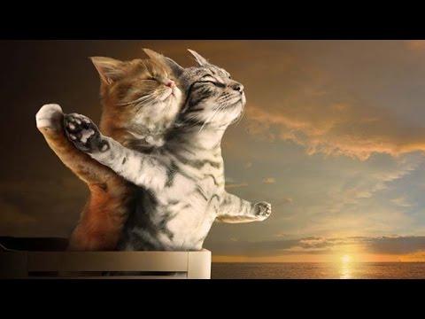 Los Videos de gatos más chistosos 2016. Videos para morir de risa de gatos muy graciosos