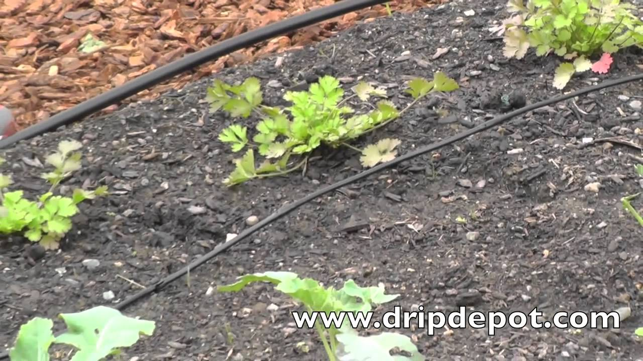 How to Install a Drip Irrigation System in a Small