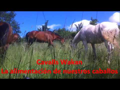 Video Feeding our horses at Cavalls Wakan Autor: Imgagen Miniatura Youtube