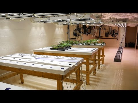 Part 1 - Overview - Basement Hydroponic LED Garden Tour