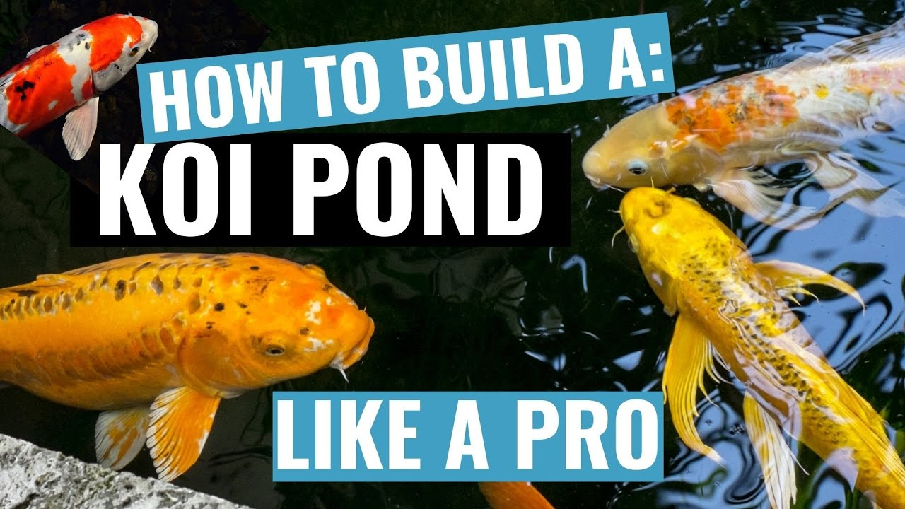How to build a koi fish pond dvd video training youtube for Koi carp pole