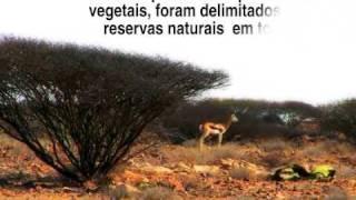 Angola Fauna E Flora