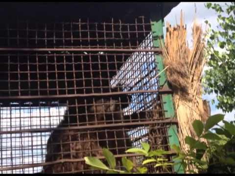 Illegaler Bärenhandel in der Ukraine: Bärenjunges an TV-Sender für 1.000 Dollar verkauft