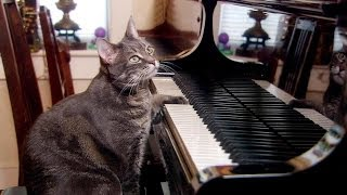 Nora the piano playing cat | Extraordinary Animals | Series 2 | Earth