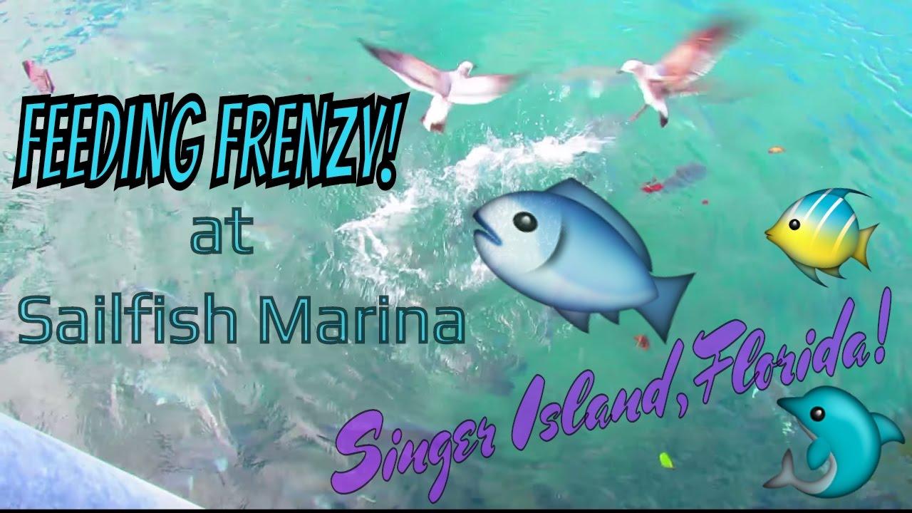 Feeding frenzy sailfish marina singer island florida youtube