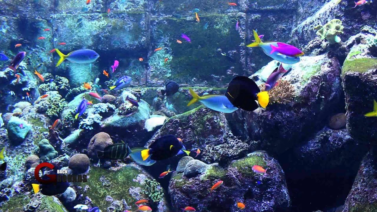 Download free hd fish tank avi elusrperusin50 for Fish tank screen